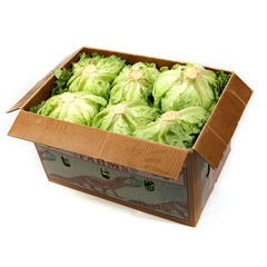 Lettuce (box 12) , Wholesale - HFM, Harris Farm Markets