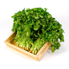 Coriander (6 bunches) , Wholesale - HFM, Harris Farm Markets