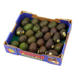 Avocados Small (tray 23-28) , Wholesale - HFM, Harris Farm Markets
