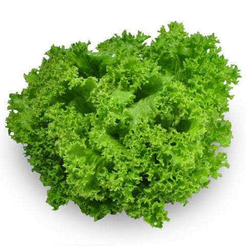 Lettuce Living - Green Coral (each) , S13S-Veg - HFM, Harris Farm Markets