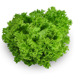 Lettuce Living - Green Coral | Harris Farm Markets