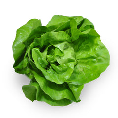 Lettuce Living - Butter Leaves (Large Green) (each) , S13S-Veg - HFM, Harris Farm Markets