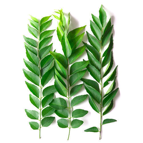 curry leaves in english