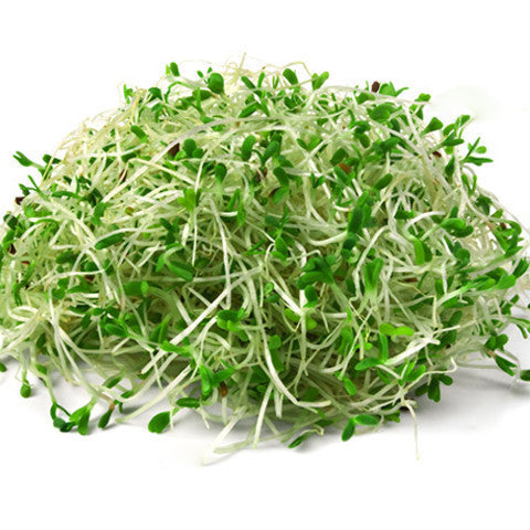 Sprouts Alfalfa (125g tub) , S12S-Veg - HFM, Harris Farm Markets