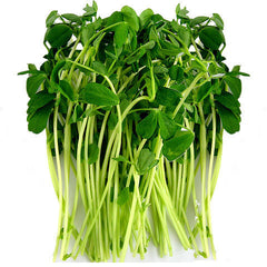 Sprouts Snow Pea (100g tub) , S12S-Veg - HFM, Harris Farm Markets