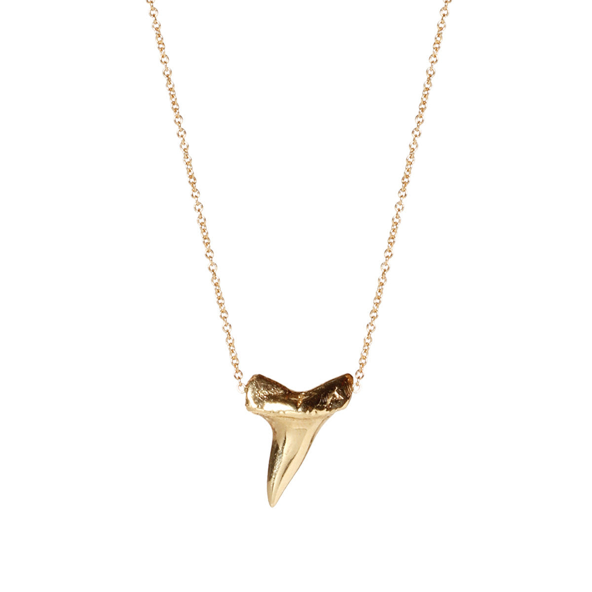 14k sharks tooth necklace