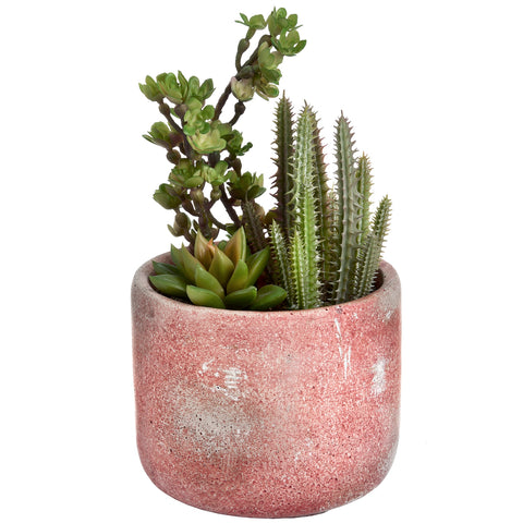 Cacti and Succulent In A Rustic Pot - MEEKNEST