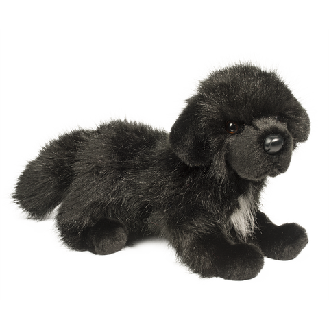 Bundy the stuffed Newfie