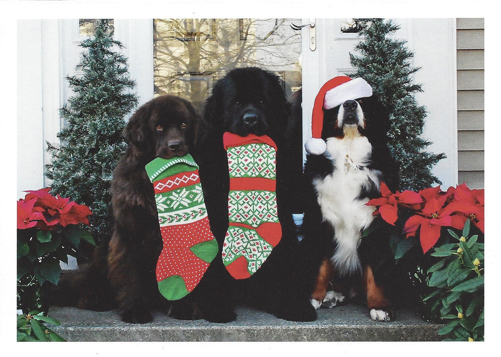 2 newfs & a berner, Christmas Cards - 10 cards | BIG Gentle Dogs