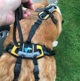 """Help Em' Up Harness"" - XL 125 to 225 lbs (SHIPPING INCLUDED)"