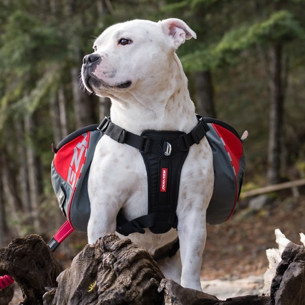 Summitt Backpack for dogs over 95 pounds