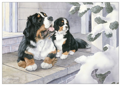 Bernese Holiday Cards - 10 cards