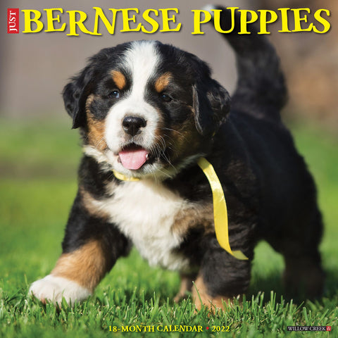just bernese mountain dog puppies 2022 calendar