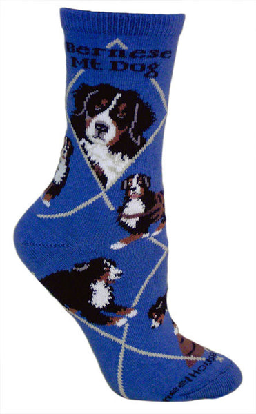 Bernese Mountain Dog Socks on Blue