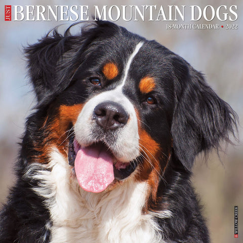 just bernese mountain dogs 2022 calendar