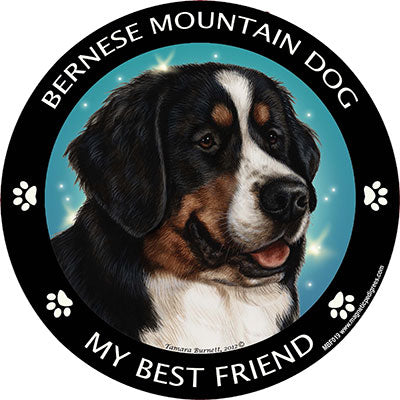 Bernese Mountain Dog my best friend - Magnet