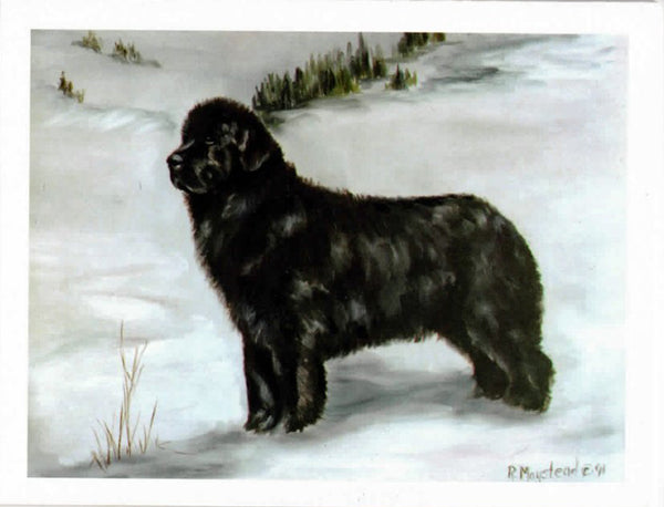 Newfoundland Blank Note Cards - standing Newf
