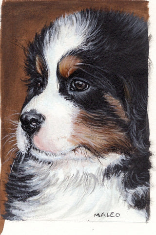Sympathy Card, 3-pack - Bernese