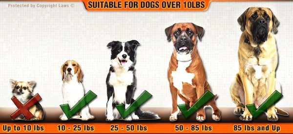 DT Harness for XL dogs