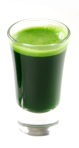 Wheatgrass Shot 1oz