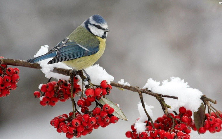 Bird in Winter Paint by Numbers