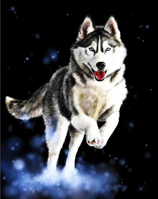 Adorable Husky Paint by Numbers