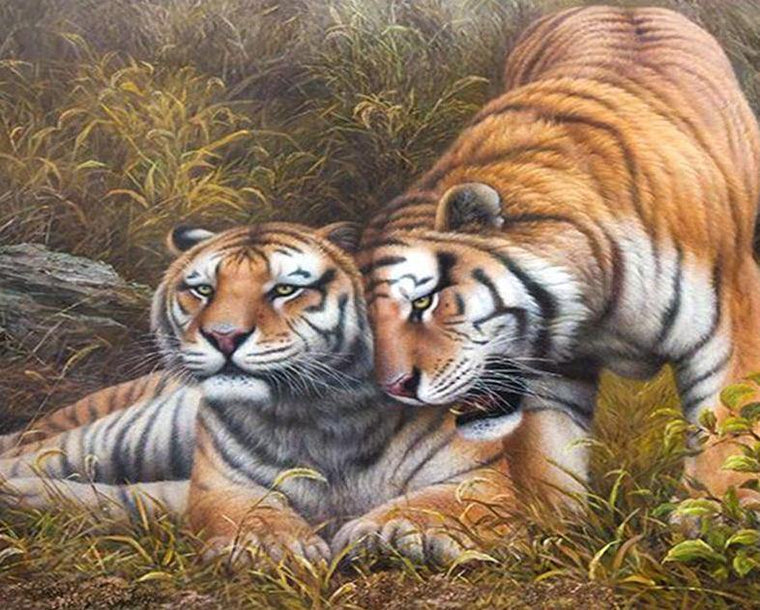 Tigers Pair Paint by Numbers