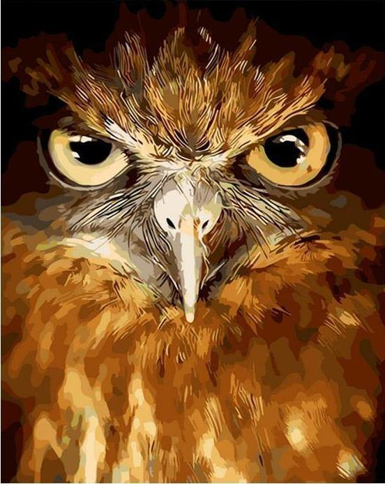 Owl Stare Paint by Numbers