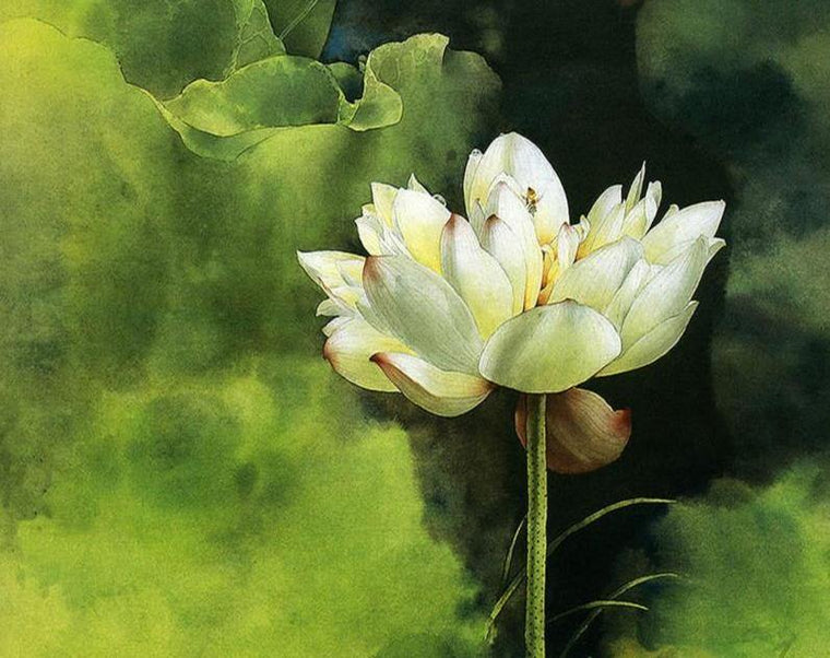 Lotus Flower Paint by Numbers