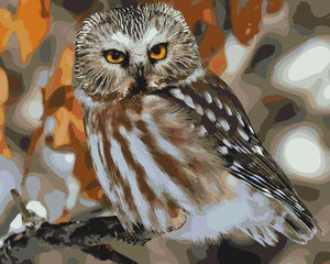 Starring Owl Paint by Numbers