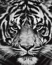 Load image into Gallery viewer, Black & White Starring Tiger Painting Kit