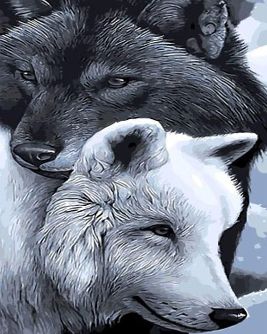 Black & White Wolves Paint by Numbers