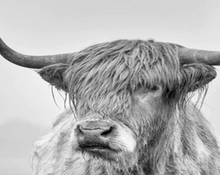 Load image into Gallery viewer, Black & White Yak Head Paint by Numbers