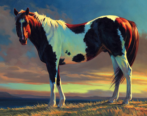 Brown & White Horse Paint by Numbers