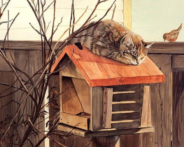 Cat on Birds House Paint by Numbers