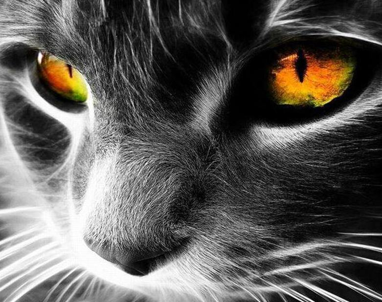 Cat with Yellow Eyes Paint by Numbers