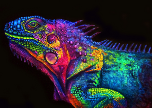 Colorful Chameleon Paint by Numbers