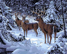 Load image into Gallery viewer, Elk in the Snow Paint by Numbers