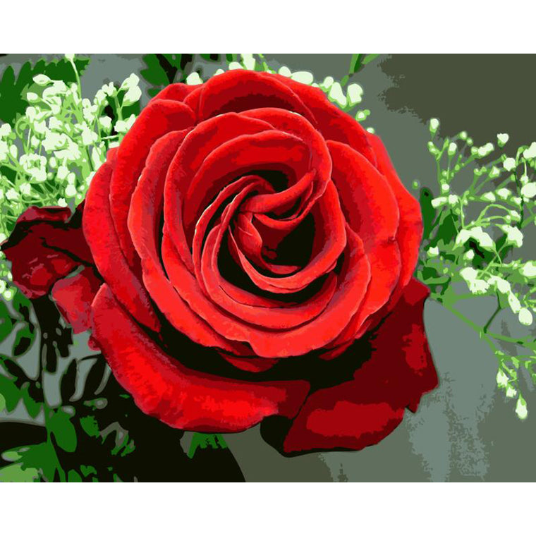 Gorgeous Red Rose Paint by Numbers
