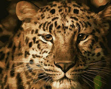 Load image into Gallery viewer, Leopard Stare Paint by Numbers