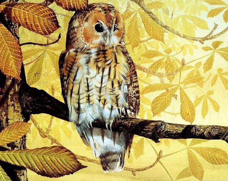Owl on Tree Paint by Numbers