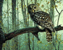 Load image into Gallery viewer, Owl Paint by Numbers Kit