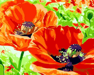 Red Poppies Paint by Numbers