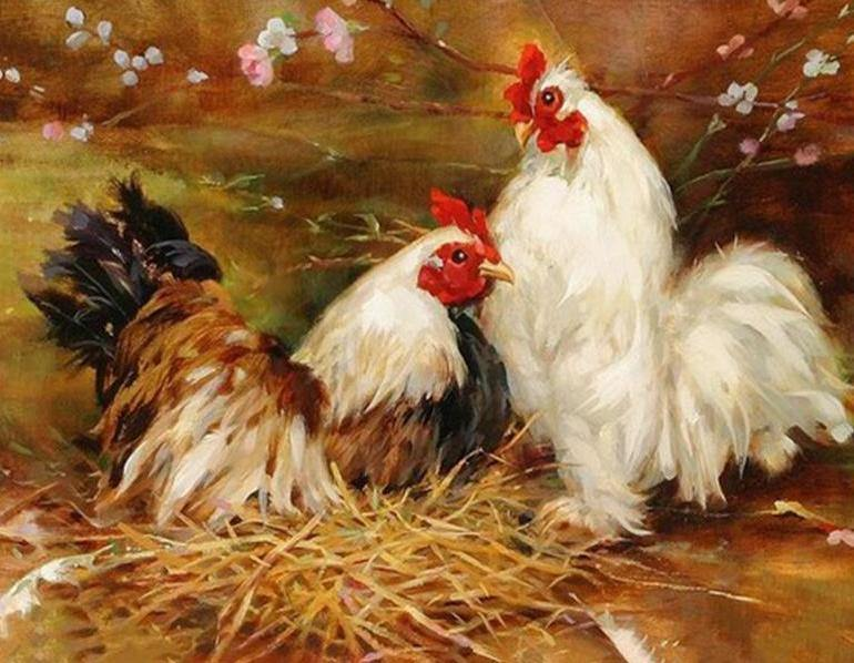 Roosters Paint by Numbers