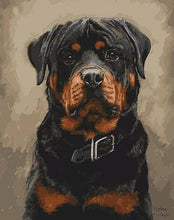 Load image into Gallery viewer, Rottweiler Paint by Numbers