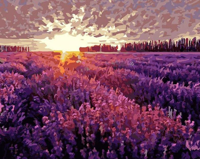 Lavender Fields Paint by Numbers