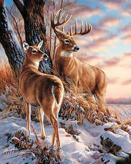 Stag & Deer Paint by Numbers