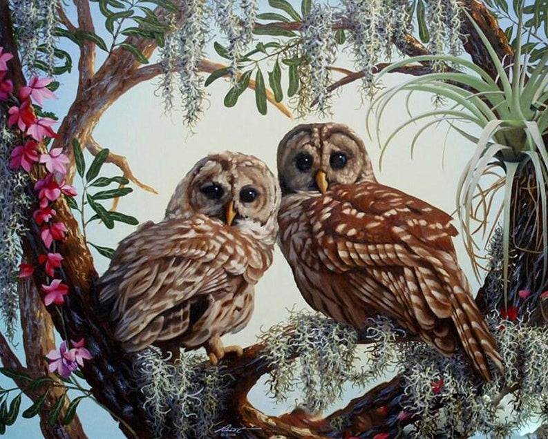 Stunning Owls Pair Paint by Numbers