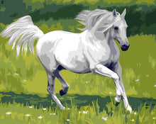 Load image into Gallery viewer, White Horse Paint by Numbers