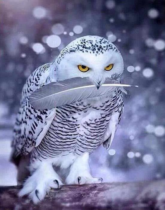 Stunning White Owl Painting by Numbers